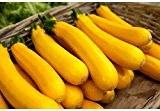 5 graines semences courgette jaune d'italie courge comestible fruit legume potager