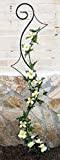 DanDiBo Support pour plantes grimpantes Riva Treillis en métal H-148cm L-30cm Support pour plantes grimpantes insérer dans le sol