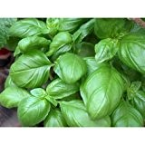 Lot de 30 Graines BIO basilic grand vert genovese Aromatique Potager