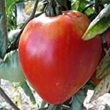 Tomate coeur de boeuf 80 graines